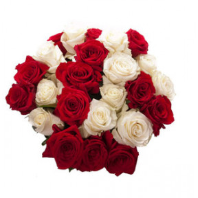 Red and  White Roses (18 Roses)