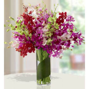 Vibrant Color (10 Red ,20 Purple ,10 Pink ,10 Green Mokara Orchids)