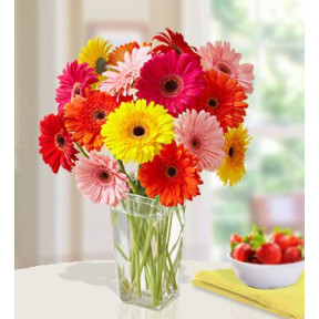 Bright N Beautiful (20 Mixed Gerbera)
