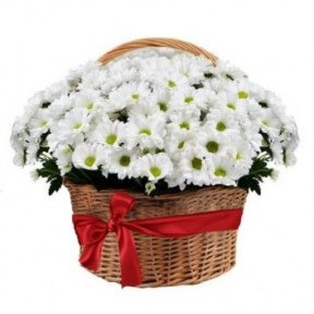Composition Basket Chrysanthemum Daisy White