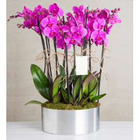 10 Purple Orchid