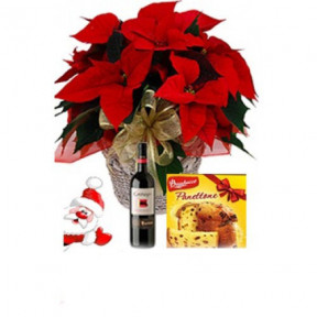 Poinsettia, Wine and Panettone