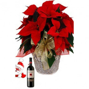 Poinsettia Wine