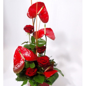 Arrangement of red Anthuriums and Roses in container (Classic)