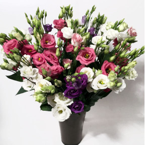 Bouquet of Lisianthus (Classic)