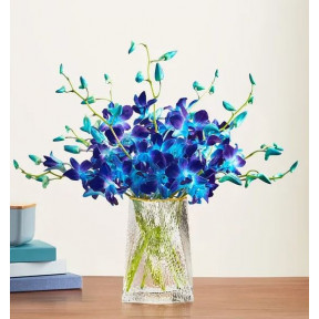 Ocean Breeze Orchids (10 Stems with Purple Vase)