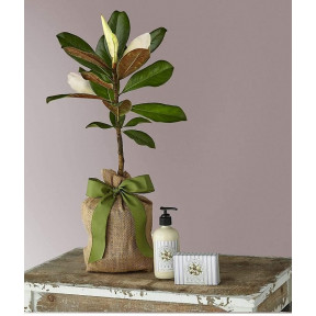 Magnolia Sapling With Lavender Soap & Lotion Duet