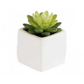 Potted Succulent 6