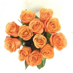 12 Orange Ecuadorian Roses (12 Roses)