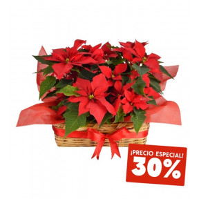 Basket Of 5 Poinsettia