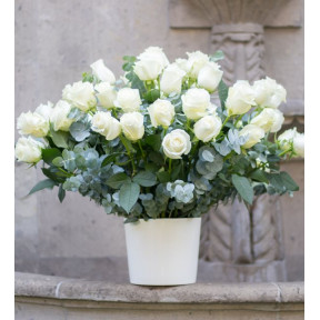 40 Potted White Roses