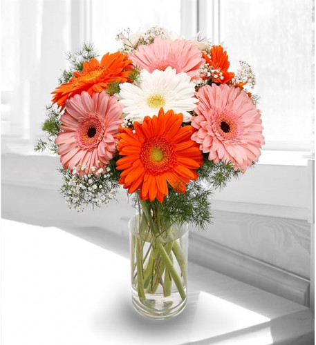 Aromatic Gerberas - Brighter Side Of Life