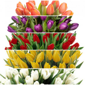 Send bouquet Pink tulips blombud (Large)