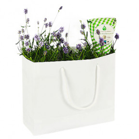 Send Lavender In The Bag As A Flower Messenger