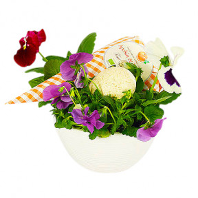 Send Pansie Planting As Flower Delivery