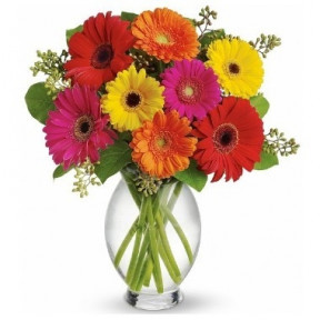 Gerberas. Vase Included