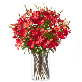 MyBouquet red lilies (20 Lilies)