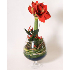 Arrangement AMARYLLIS (Medium)