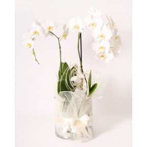 Arrangement ORCHID DREAM (Large)