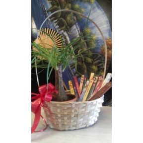 Gift set of Orient incenses& Palm tree in basket