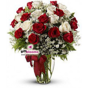 25 Red and White Roses Divine Love