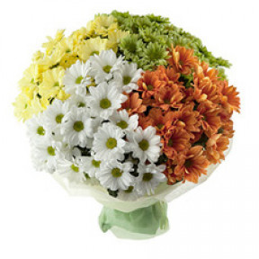Bouquet of 19 multi-colored chrysanthemums