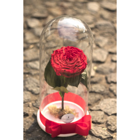 Preserved Rose Xxl In Capsule (Preserved Rose XXL in capsule)
