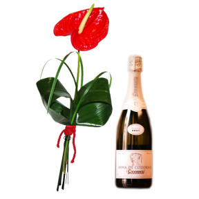 Red anthurium and cava