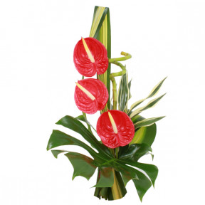 Vip red anthuriums