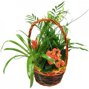 Wicker basket with natural plants