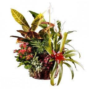 Basket of natural plants