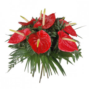 Bouquet of red anthuriums (Medium)