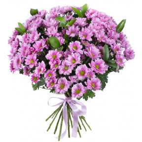 Bouquet of pink chrysanthemums with a bow