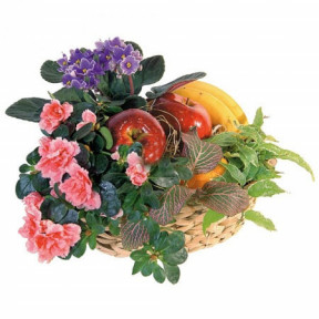 Fruit basket and potted plants