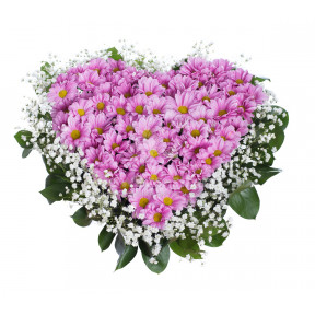 Heart of pink chrysanthemums and gypsophila