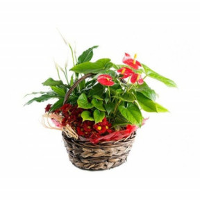 Basket with Anthurium and Spathiphyllum