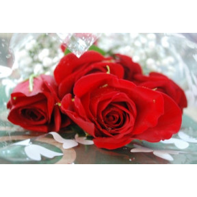 Rose Gift Wrapped