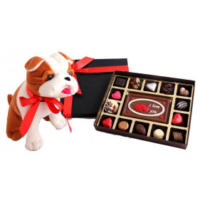 An extremely cute Puppy with a box of belgian chocolates and 'I Love You' Milk chocolate bar